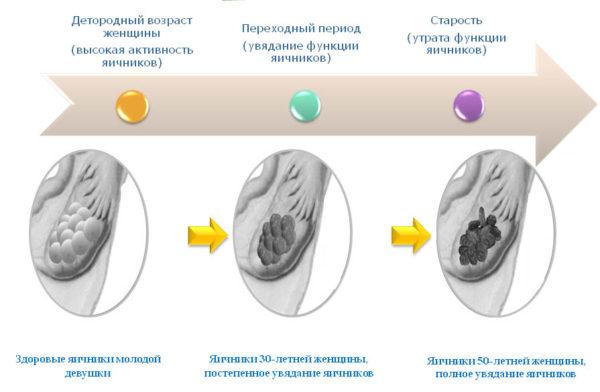 Приливы при климаксе лечение без гормонов. Основные способы устранения приливов