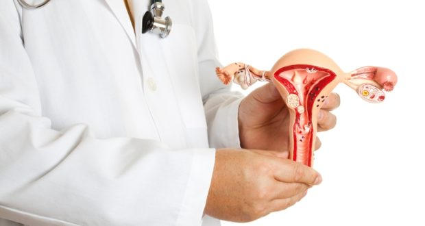 Боровая матка лечит эндометриоз
