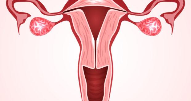 Биопсия и гистология шейки матки при дисплазии : показания к назначению и расшифровка