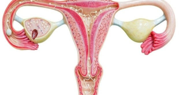 Чего нельзя делать при кисте яичника